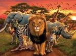 African Splendor Puzzle - 500pc