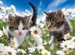Kitties and Daisies Puzzle - 100pc